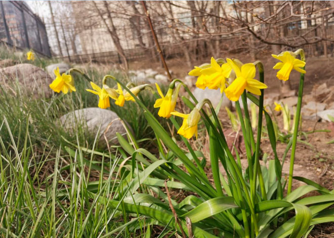 В Черемушки пришла весна!