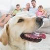 Что проверить, покупая квартиру у семьи с детьми