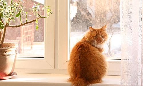 Ох, нелегкая это работа… продать квартиру с двенадцатью кошками
