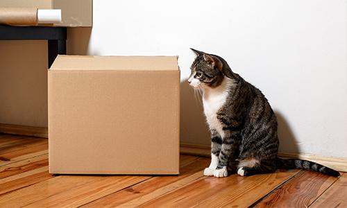 Cпрос на рынке аренды вновь снижается, предложение растет